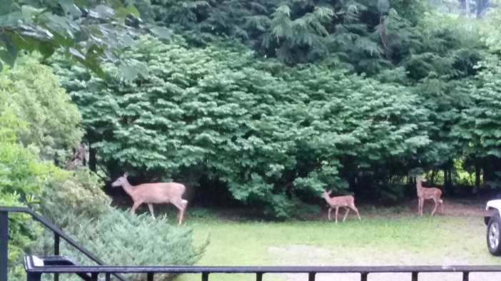 Good Morning Bambi.